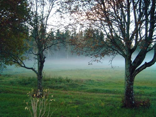 Herbstnebel am Morgen