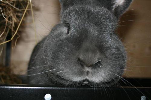 """Unser Kaninchen """"Moppel"""""""