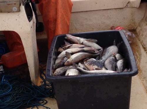 Ein Eimer voll Fisch