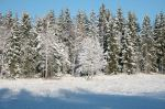 winter06