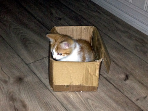 Frodo im Paket