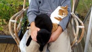 Katzen auf dem Schoß von Loretta