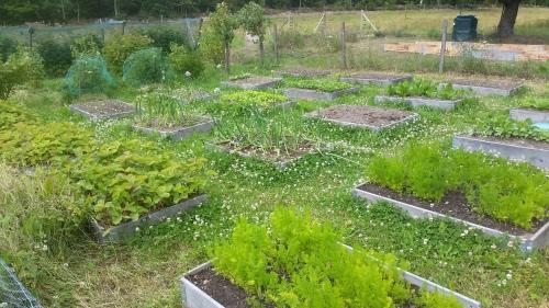 Hochbeet-Garten